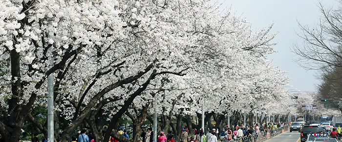 160328_springflower_art1.jpg